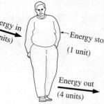 Why The Energy Balance Equation Results In Flawed Approaches To Obesity Prevention And Management