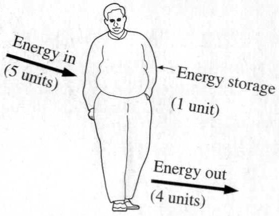 1st law of thermodynamics obesity