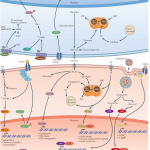 Transcriptional Control of Energy Regulation