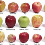 sharma-obesity-apple-varieties