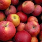 sharma-obesity-apples