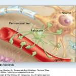sharma-obesity-astrogliosis