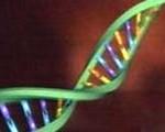 sharma-obesity-dna_molecule9